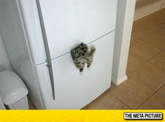 Best Refrigerator Magnet Ever Funny Animal Pictures, Funny Photos, Funny Animals, Cute Animals, Funny Facts, Funny Memes, Hilarious, Jokes, Crazy Cat Lady