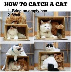 haha this would totally work. Cats are attracted to empty boxes like an alcoholic is to a booze store x)