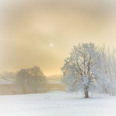 Winter mists in Stockholm Winter Szenen, I Love Winter, Winter Magic, Winter Light, Winter Colors, Winter White, Winter's Tale, Snow Scenes, Winter Beauty