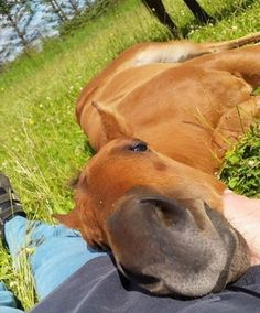 14 Photos of Beautiful and Funny Horses Funny Horses, Cute Horses, Pretty Horses, Horse Love, Beautiful Horses, Animals Beautiful, Horse Girl, Cute Little Animals, Cute Funny Animals