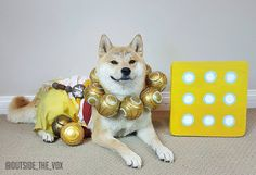 Zenyatta Doge by @Outside_the_Vox. YESSS