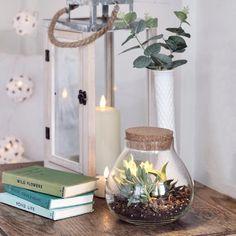 Terrarium Glass Vase Our glass terrarium is the perfect bookshelf and windowsill accessory. The Bell Jar, Bell Jars, Rose Plant Care, Terrarium Jar, Mini Plants, Centerpieces, Table Decorations, Planting Roses, Window Sill