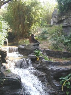 Animal Kingdom, Disney World, FL