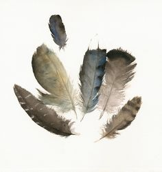 Found Feathers No. 4 print of watercolor от amberalexander на Etsy