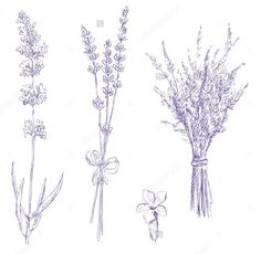 Lavender tattoo ideas