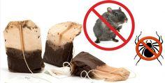 Tausendmal besser als gefährliches Rattengift!