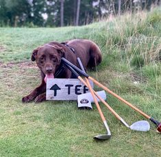 More dog caddies please 🙌 📸: Hickory Golf, Community, Dogs, Pet Dogs, Doggies