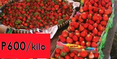 Strawberries in Baguio City Are That Expensive