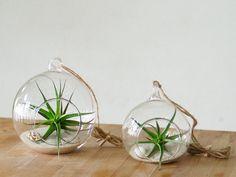 Decoración de bodas. Esfera con planta de aire en el interior / Wedding decorations. Sphere glass terrarium with air plant - hecho a mano en DaWanda.es