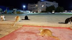 Wild Cats Cyprus