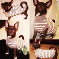 Questo splendido cucciolo ha scelto #classicpull #forpetsonly #minupetshop #treviso #minubonbons