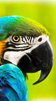 Tropical Birds, Exotic Birds, Colorful Birds, Beautiful Nature Pictures, Beautiful Birds, Blue Gold Macaw, Bird Wallpaper, Iphone Wallpaper, Australia Animals