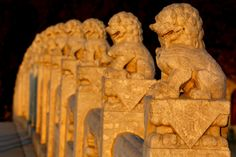 Stone lions on the Seventeen-Arch Bridge, Summer Palace. #travel #Beijing #China