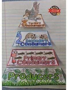 Freebie Ecology Energy Pyramid for Interactive Notebooks - X