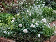 White Roses and Perennial Garden