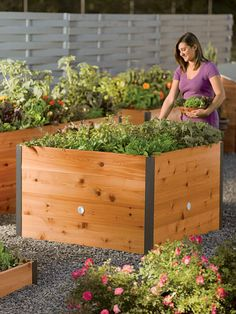 4' x 4' Elevated Cedar Raised Bed - going to recommend for tomatoes and herbs by a patio!