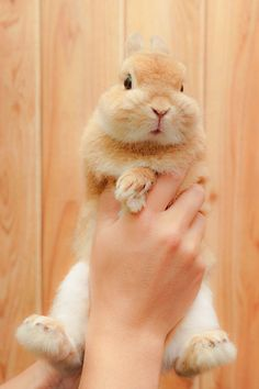 Dis bunny is cute💖 Cute Baby Bunnies, Cute Babies, Animals And Pets, Funny Animals, Beautiful Rabbit, Rabbit Life, Fluffy Bunny, Cute Little Animals, Animals Beautiful