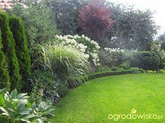 Ogród KasiWB - część II - strona 24 - Forum ogrodnicze - Ogrodowisko