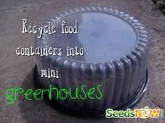 Recycle your used food containers into mini greenhouses!