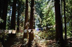 California Redwood Wedding