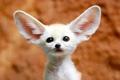 Image result for baby animals
