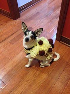 Spaghetti Costume for Dogs
