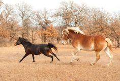 Research Shows Horses Are Selective In Copying Behavior