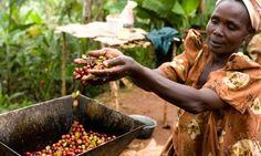 5 Reasons to drink Organic Coffee