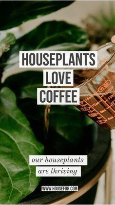 Outdoor Plants, Garden Plants, Outdoor Gardens, Plants Indoor, House Plants Decor, Flowering House Plants, Easy House Plants, Plant Decor, Garden Loppers