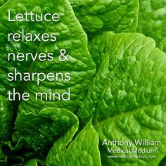 Lettuce relaxes nerves and shapens the mind. Really? ! I must start to add it daily to my diet.
