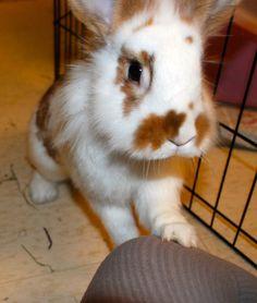 Momo, the curious bunny