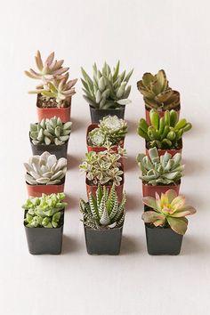 Bufanda De Cachemira Modal - Succulentbuds2 Por Vida Vida 6E7yM2HsG1