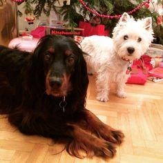 Monty with Asta