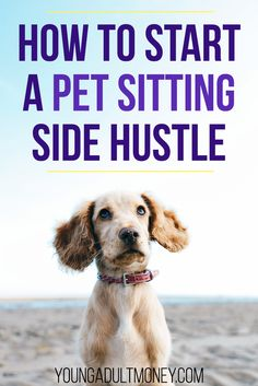 8 Best Pet sitting jobs images in 2014 | Animaux, Pet