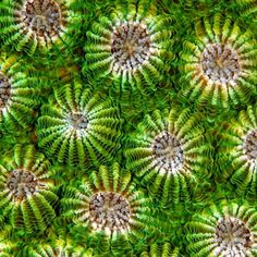 crossconnectmag:Macro coral photographs from Belgium...