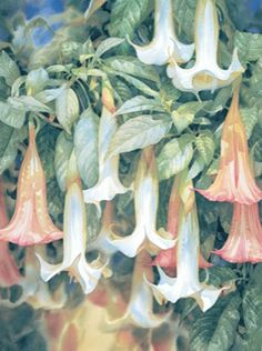 Climbing Jasmine (Almost Sold Out) – Limited edition print by Darryl Trott – Art on Demand Watercolor Flowers, Watercolor Paintings, Painting Flowers, Floral Paintings, Watercolours, Different Art Styles, Trumpets, Limited Edition Prints, Art Sketchbook