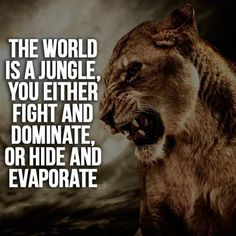 30 Motivational Lion Quotes In Pictures - The Best Lion Picture Quotes on Courage, Strength and determination to succeed. Tiger Quotes, Lion Quotes, Animal Quotes, Quotes With Lions, Motivational Quotes For Students, Motivational Speeches, Motivational Videos, Motivational Board, Literary Quotes