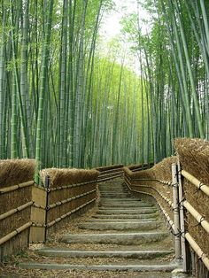 Bamboo Path in Kyoto, Japan--not trees.but like trees Bamboo Path in Kyoto, Japan--not trees. Bamboo Tree, Small Backyard Gardens, Japanese Garden Backyard, Foto Art, Stairway To Heaven, Pathways, Stairways, Landscape Architecture, Landscape Stairs