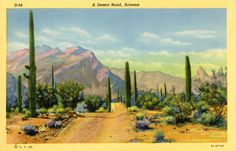 Vintage Arizona postcard of a desert road with cacti and mountain range in background.