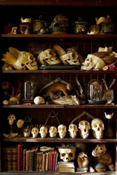"skulls. i want a shelf like this for holding ""inspiration."""