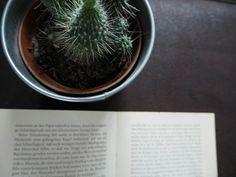 #book #Buch #Tee #tea #candle #Kerze #light #lit #Kerzenschein #lesen #reading #read #pages #Seiten #dream #romantix #fall #Herbst #Blatt #vibes #red #cactus #green