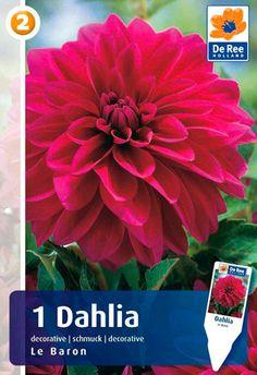 Dahlia-Le-Baron.jpg (327×478)