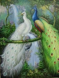 Amazon.com: 12X16 inch Animal Canvas Art Repro White and Green Peacocks: Home & Kitchen