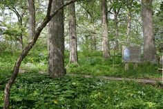 Whitmire Wildflower Garden by Missouri Botanical Garden, via Flickr  Shaw Nature Reserve in Gray Summit, Mo.  I LOVE THIS PLACE!