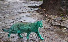 Chat-vert-Varna-Bulgarie-7   Ufunk.net