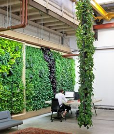 Green Fortune Amsterdam office with plantwall/vertical garden in an old industrial warehouse in Amsterdam Noord. Shared space with architects, creatives and innovators. Pflanzenwand, groene wand, green wall.
