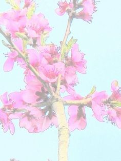 'Zarte+Apfelblüten+-+Tender+apple+blossoms+-+MW+Art+Marion+Waschk'+von+Marion+Waschk+bei+artflakes.com+als+Poster+oder+Kunstdruck+$16.63