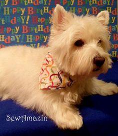 Birthday Westie!
