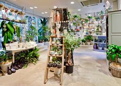 Garden Center, Retail, Florist, Flowershop, Nursery, Design