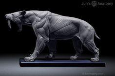 Big Cats anatomy models, lion, tiger, saber-tooth - CGFeedback